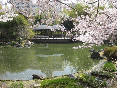 2014年の桜no1