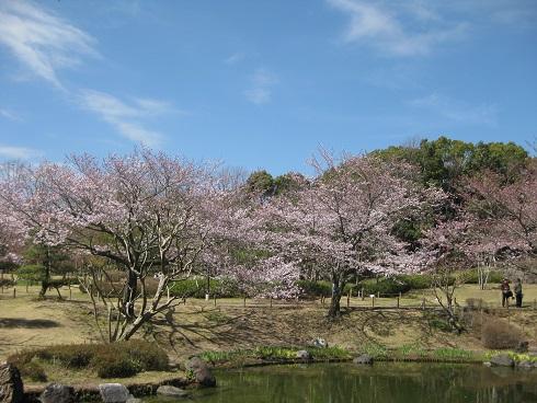 桜が絶景手話