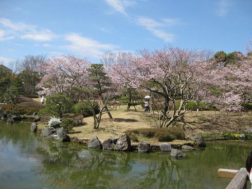 日本庭園でのお花見